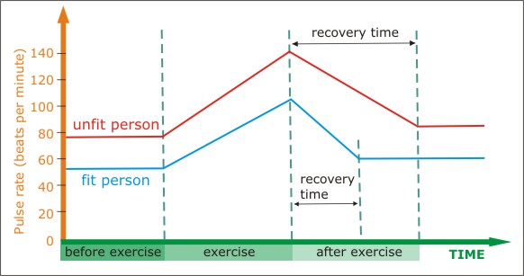 the effect of exercise on pulse rate coursework Classroom activity for the nova program marathon challenge back to teachers home marathon challenge classroom activity the affect of exercise on pulse rate.